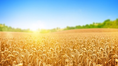 Wallpaper wheat, field, nature, sky, 4k, Nature #15454