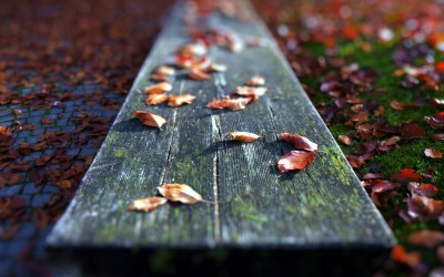Fallen Leaves Close-up wallpapers | Fallen Leaves Close-up stock photos