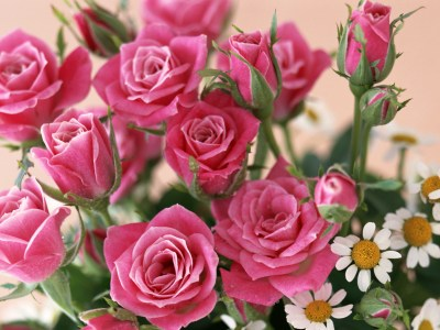 Home Roses wallpapers | Home Roses stock photos