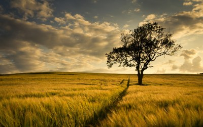 Dark Tree Big Field wallpapers | Dark Tree Big Field stock photos