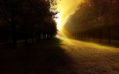 Bright Sunshine Behind Trees wallpapers | Bright Sunshine Behind Trees stock photos