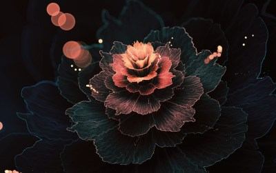 Abstract Fractal Rose Absorb wallpapers | Abstract Fractal Rose Absorb stock photos