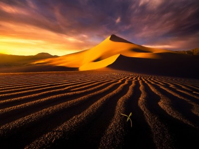 Brown Desert Sprout Sunset wallpapers | Brown Desert Sprout Sunset stock photos