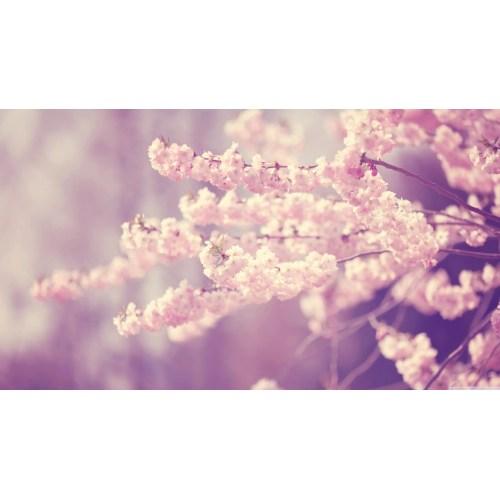Medium Crop Of Cherry Blossom Wallpaper