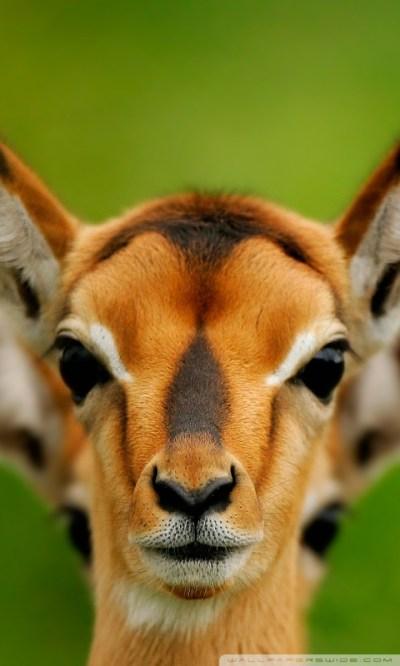 Wild Animals 4K HD Desktop Wallpaper for 4K Ultra HD TV • Tablet • Smartphone • Mobile Devices