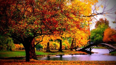 Autumn wallpaper HD ·① Download free wallpapers for desktop, mobile, laptop in any resolution ...