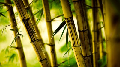 Bamboo Desktop Wallpaper ·① WallpaperTag