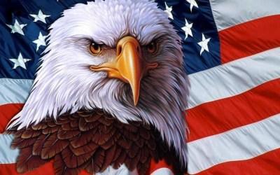 American Bald Eagle Wallpaper ·①