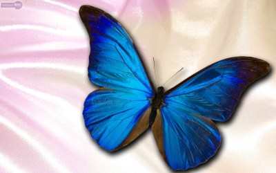 Cool Butterfly Backgrounds ·①