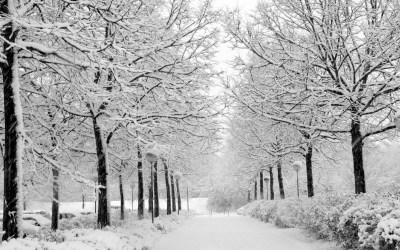 Winter Wallpaper for Desktop ·①