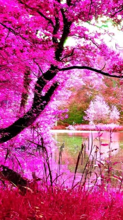 Pink Nature Wallpaper ·① WallpaperTag