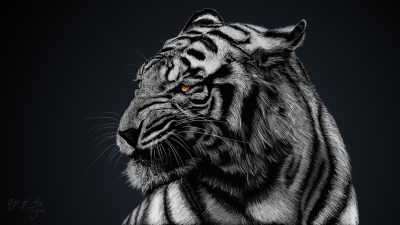 Cool Tiger Wallpapers ·①