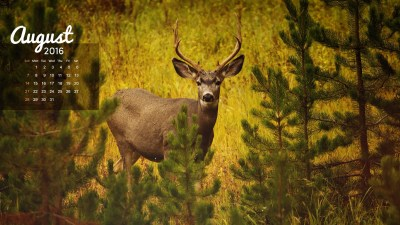 Realtree Deer Wallpaper ·①