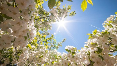 44+ Spring wallpapers ·① Download free HD wallpapers for desktop and mobile devices in any ...