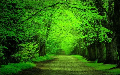Green Forest Background ·①