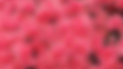 Pink Wallpaper for Desktop ·① WallpaperTag