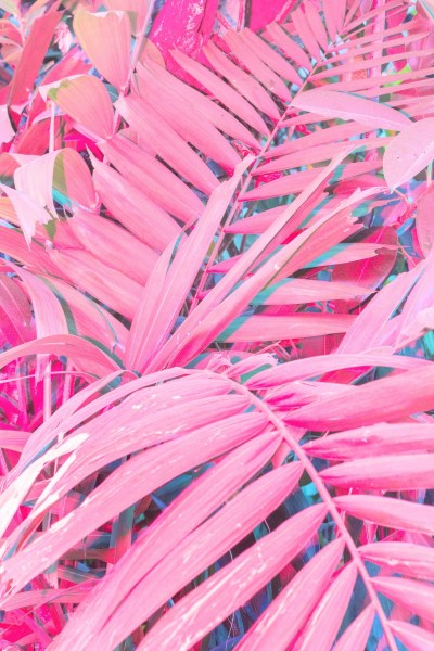 Pink wallpaper ·① Download free amazing full HD wallpapers for desktop, mobile, laptop in any ...