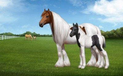 Horse Wallpaper for Computer ·① WallpaperTag