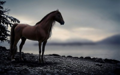 Horse Wallpapers ·①
