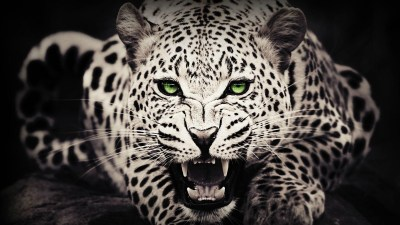47+ Cool Animal wallpapers ·① Download free beautiful High Resolution backgrounds for desktop ...