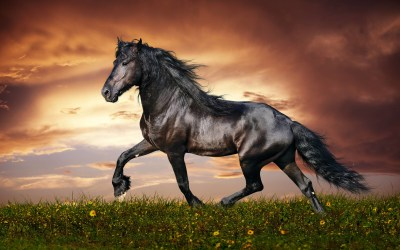 Black Horse Wallpaper ·①