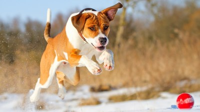 54+ Dog backgrounds ·① Download free amazing wallpapers of Dogs for desktop and mobile devices ...