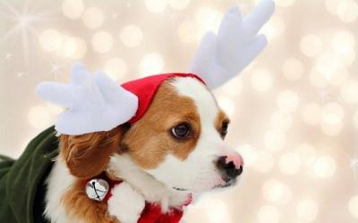 Christmas Dog Wallpaper ·① WallpaperTag