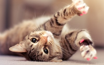 Cats wallpaper ·① Download free HD Wallpapers of Cats for desktop, mobile, laptop in any ...
