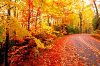 Autumn wallpaper ·① Download free cool HD wallpapers for desktop, mobile, laptop in any ...