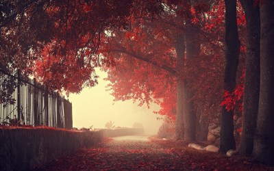 nature, Landscape, Fall, Fence, Trees, Walls, Mist, Road, Leaves, Red Wallpapers HD / Desktop ...