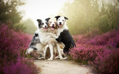 Friends, Dog, Flowers, Mist, Animals, Nature, Pet Wallpapers HD / Desktop and Mobile Backgrounds