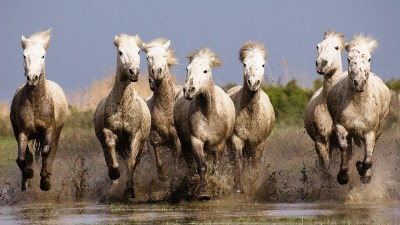 nature, Horse, Animals, Running Wallpapers HD / Desktop and Mobile Backgrounds