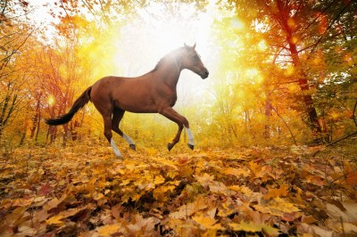 nature, Horse Wallpapers HD / Desktop and Mobile Backgrounds