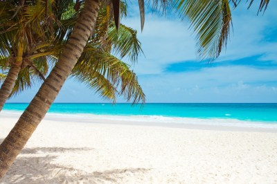 beach, Blue, Coast, Palm Trees, Landscape, Caribbean, Sea, Sky, Watering Wallpapers HD / Desktop ...