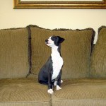 Discover Your Home's Pet-Ential – 6 Tips For A More Pet-Friendly Interior