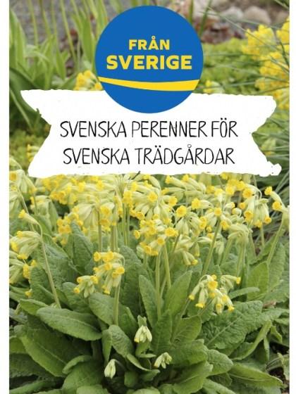 Skylt Fran Sverige sidhuvud