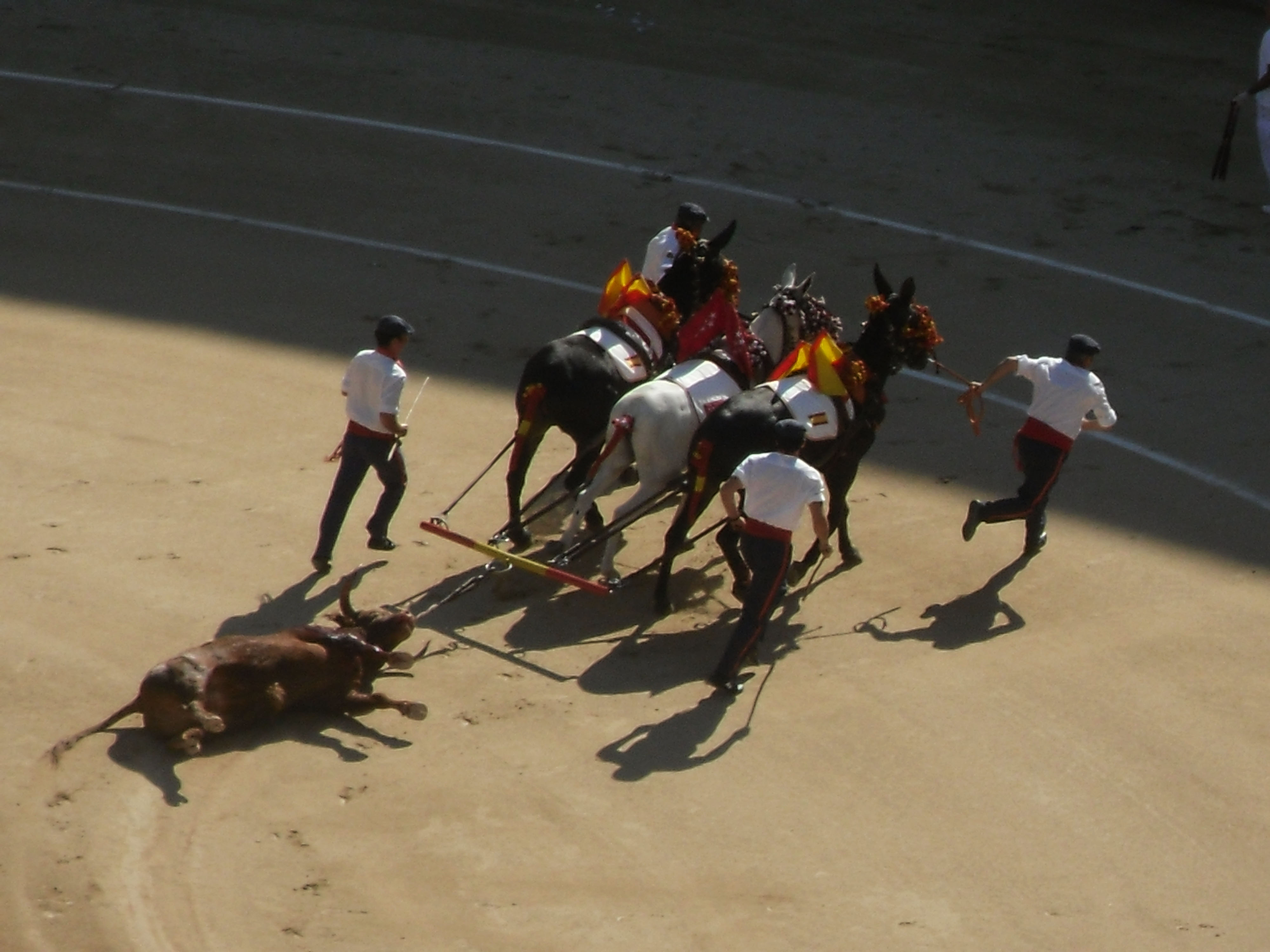 bullfighting case essay Budd and sand – the aesthetics of gender in the bullfighter and the lady  in  the case of bullfighter and the lady, it may have been these.