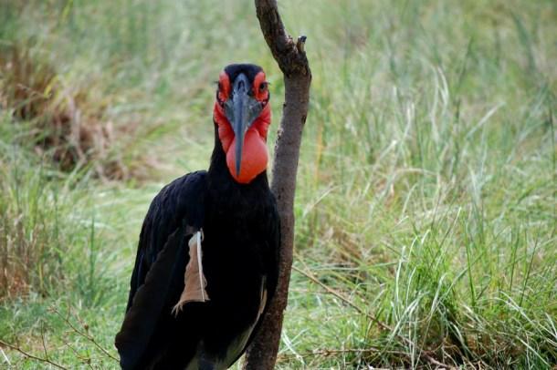 Bird, south african animals