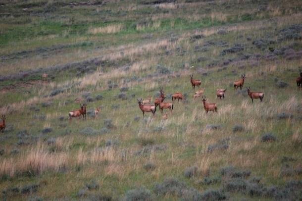 Herd of deer, South Africa