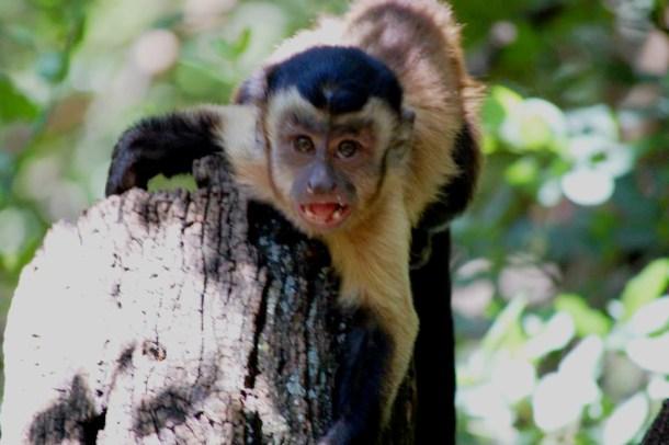 South Africa, Monkey sanctuary