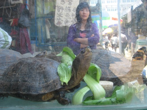 poor turtles