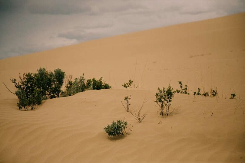 The Great Sand Hills.