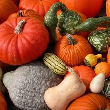 Pumpkin and Squahses