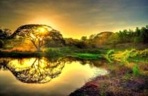 sun-tree