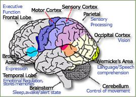 BrainSpecs