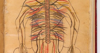 L0013312 Nervous system, Avicenna, Canon of Medicine Credit: Wellcome Library, London. Wellcome Images images@wellcome.ac.uk http://wellcomeimages.org Nervous system 1632  Canon of Medicine, al-qanun Fi-T-Tibb Ibn Sina (Avicenna) Published:  -   Copyrighted work available under Creative Commons Attribution only licence CC BY 4.0 http://creativecommons.org/licenses/by/4.0/