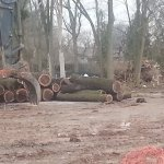 End of Ghent Street tree stand