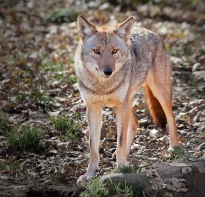 Meetings: Windows to the Lake; Fairview noisewall; Hospital; Greenbelt; Film Festival; Coyotes;