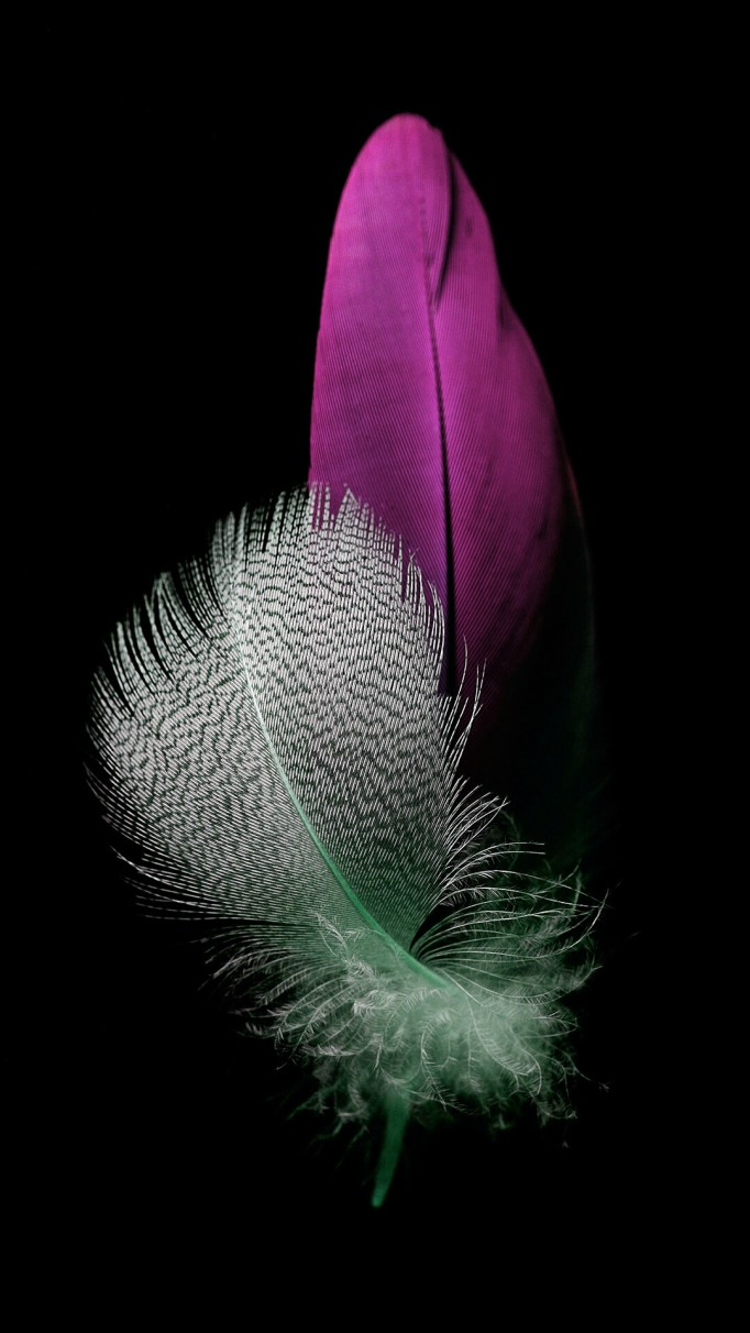 Huawei P8 lite Feather Wallpapers | WAREHOUSE
