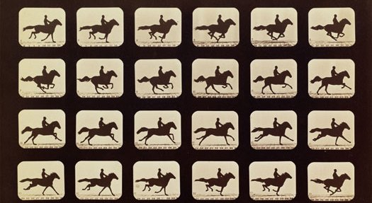 Eadweard Muybridge, Horses. Running. Phryne L. Plate 40, 1879, from The Attitudes of Animals in Motion, 1881. Albumen silver print. Image courtesy of the Board of Trustees, National Gallery of Art, Washington, Gift of Mary and Dan Solomon 2006.131.7.